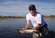 browntrout2