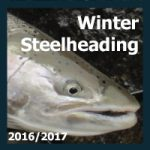 Winter Steelhead 2017